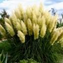 Wysokie trawy ozdobne