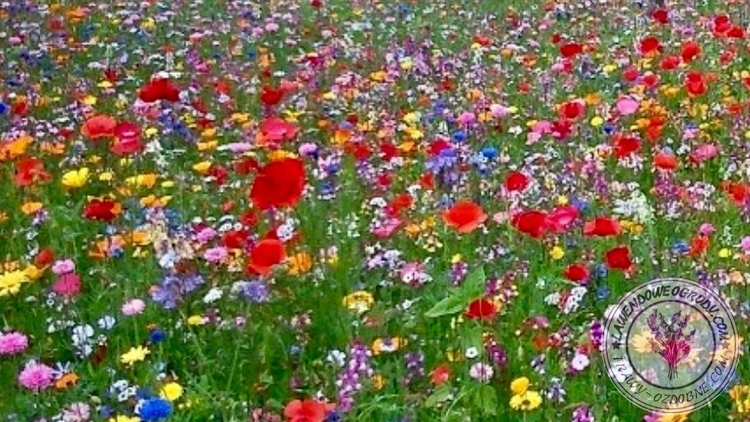 Kwietna łąka